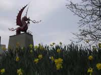 Welsh Dragon near Mametz Wood